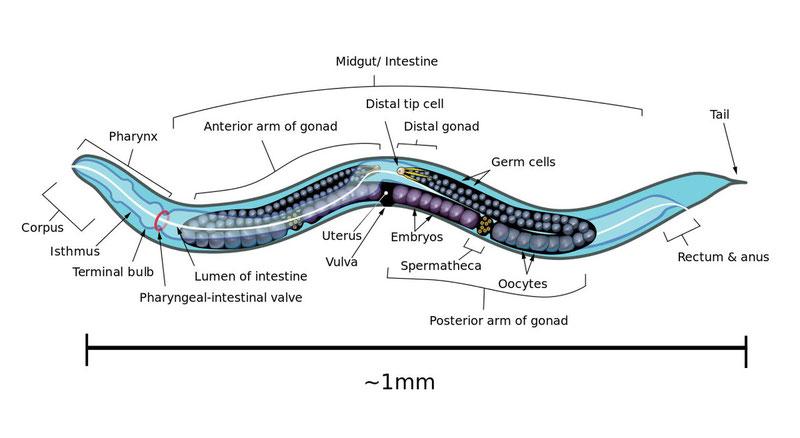 Дробление темы на части - отличный пример того, как быстро выучить тему по биологии