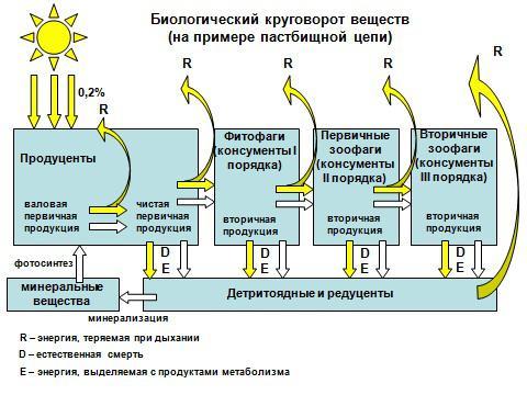 Вот как выглядит поток энергии в биосфере