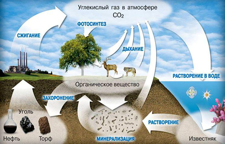 Так выглядит в природе круговорот углерода