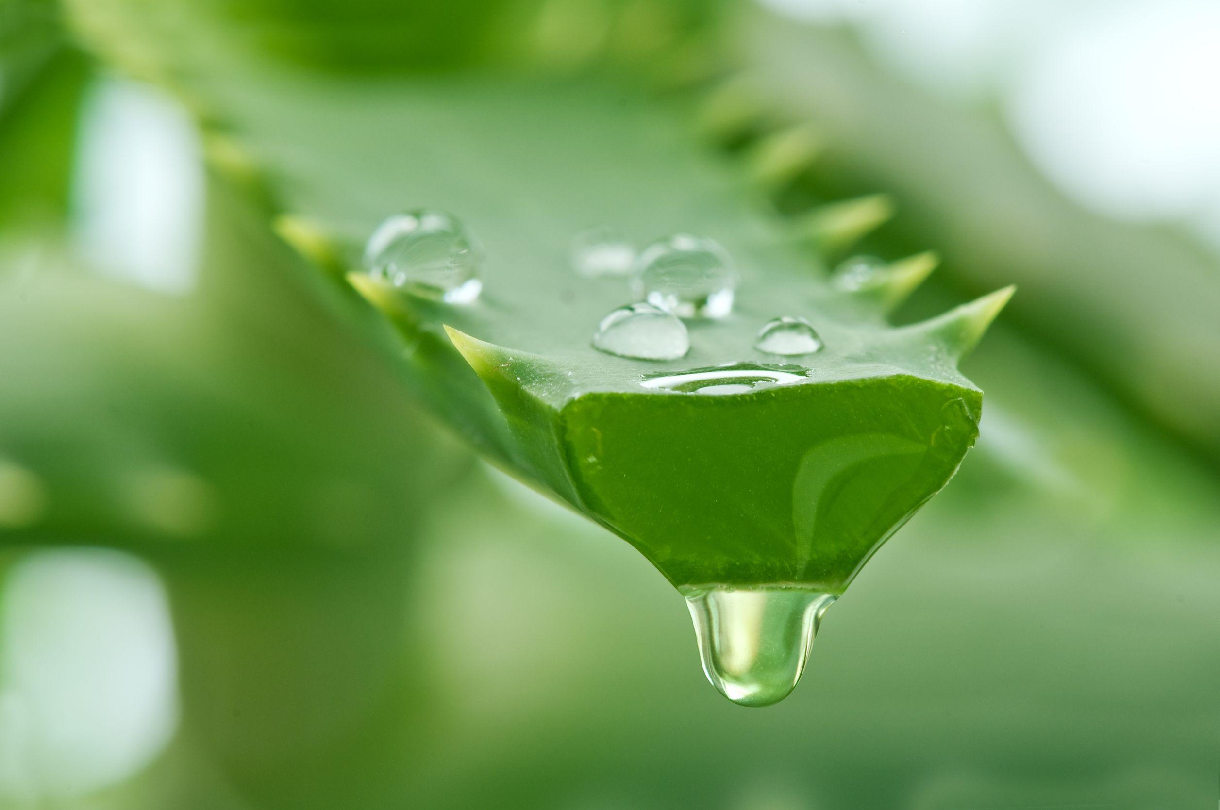 сокотерапия лечебные свойства соков
