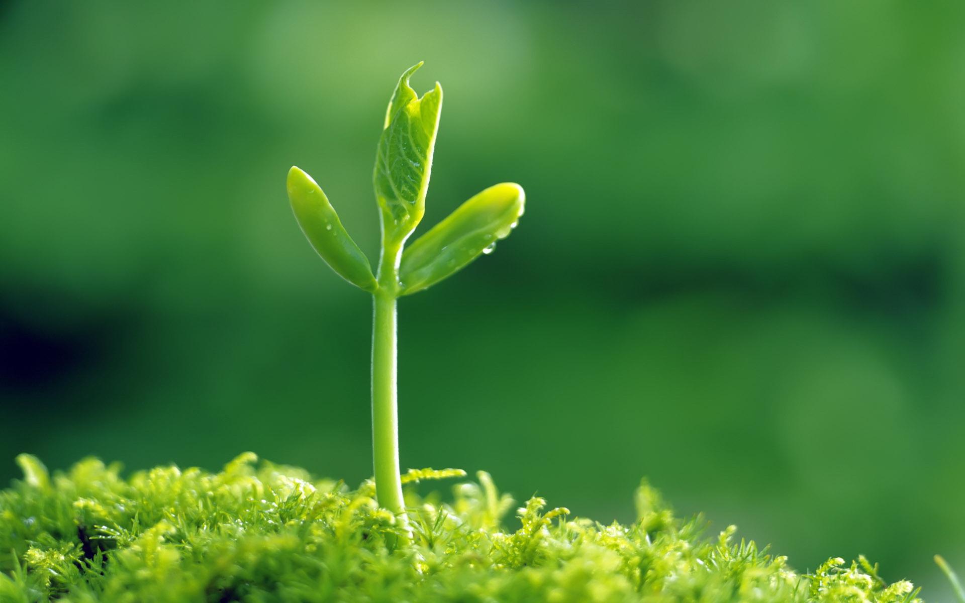 основы экологии биосфера