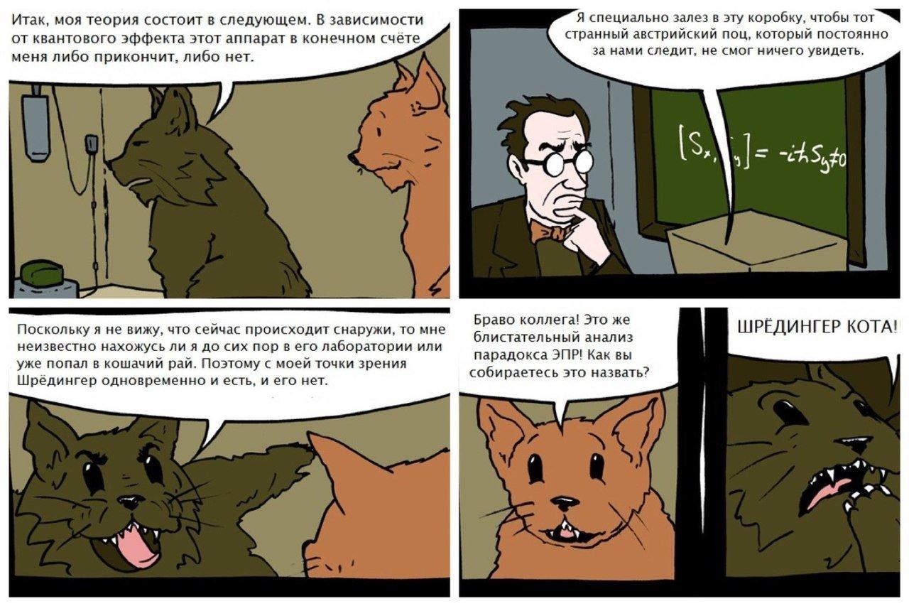 Опыт шредингера котом